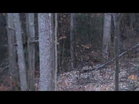 West Virginia fall turkeys sit back relax and watch.wmv