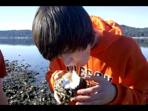 Justin eats an oyster shooter