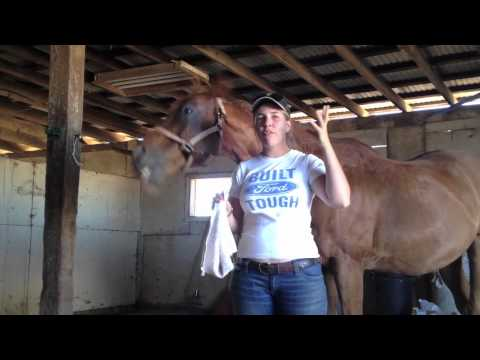 How to keep flies out of your horse's ears
