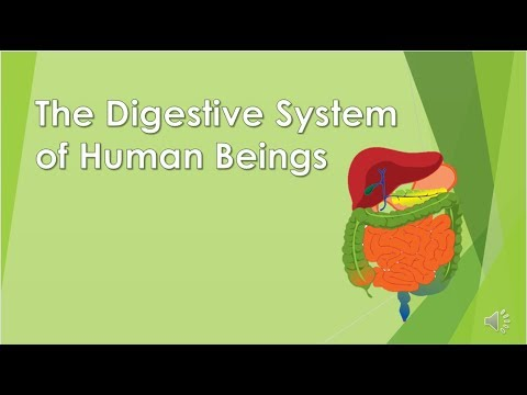 The Digestive System; Science for kids; Organs of Digestive System