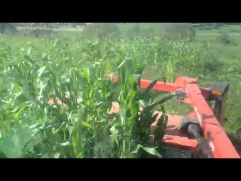 Mowing Corn