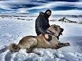 Download Turkish Shepherd Dogs - Kangal , Malaklı , Boz/Yörük , Akbaş , Çapar ve Anadolu Çoban Köpeği MP3,3GP,MP4