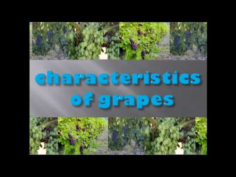Characteristics of Grapes (Origin, Berry, Wine, Growing Area)