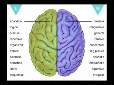 Left Brain Vs Right Brain Education