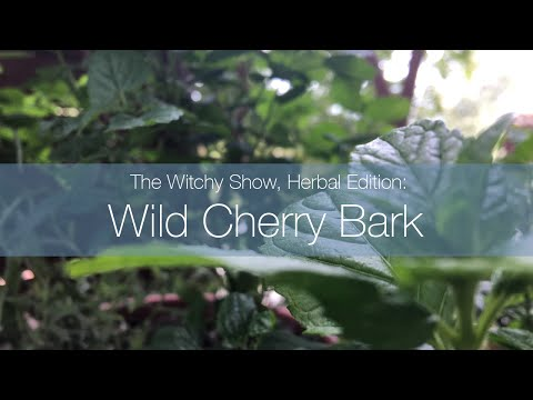 The Witchy Show, Herbal Edition: Wild Cherry