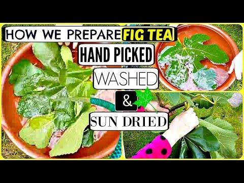 How we Prepare Organic Moroccan FIG TEA.. DETOX Health Benefit TEA. Hand Picked Washed & Sun Dried