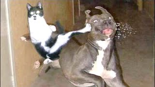 SLAMMY CATS - How funny can they get? 😂