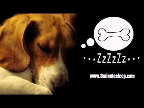 CALM YOUR DOG | Rain Sounds Soothe Anxious Dog | Nature & Birds