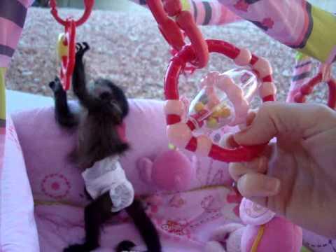 baby monkey nala playing again