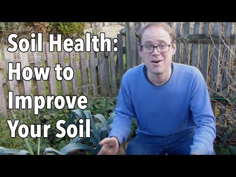 Soil Health: How to Improve Your Soil