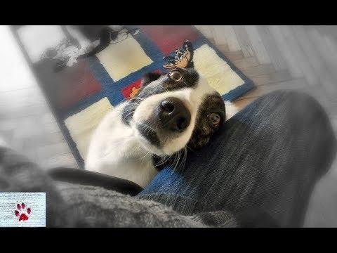 A happy three legged dog - Jasmine's story