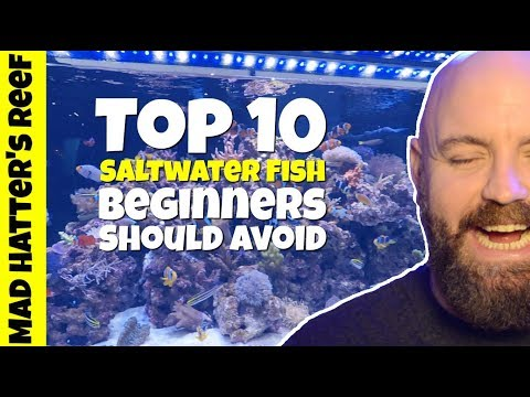 Top 10 Saltwater Fish Beginners Should Avoid