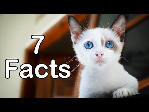 7 Facts about the Cat