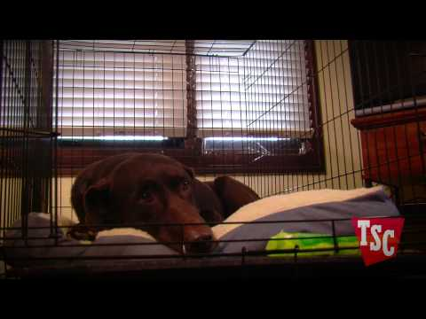 How to Select a Dog Crate
