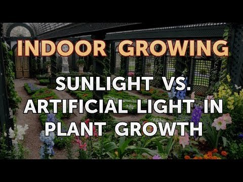 Sunlight Vs. Artificial Light in Plant Growth