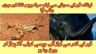 قبر کا عذاب || پاگل ہاتھی اور قبر کا بچھو||Azab E Qabr||