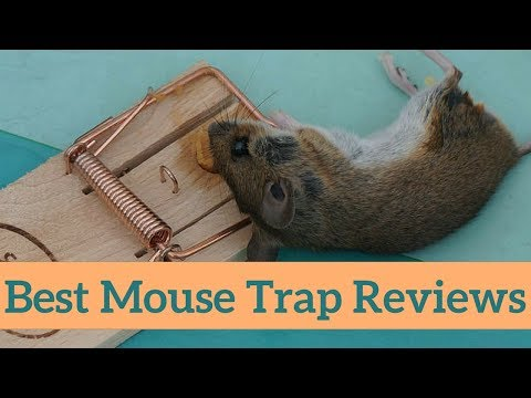Top 10 Best Mouse Traps That Works For Home, Kitchen & Garage