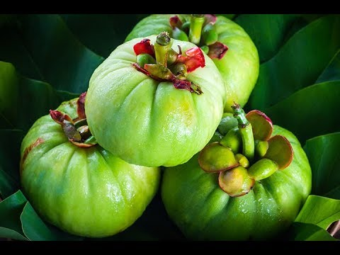 GARCINIA CAMBOGIA vs GREEN COFFEE BEAN for WEIGHT LOSS