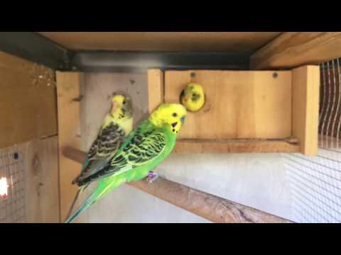 Quick Breeding Update \ September 2017