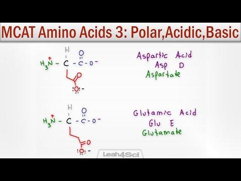 Polar Acidic and Basic Amino Acids