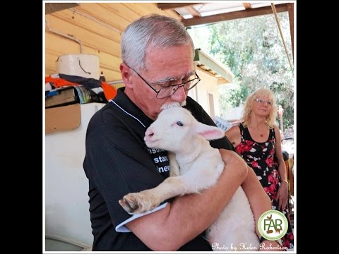 Philip the baby lamb arrives at FAR 03/11/2015
