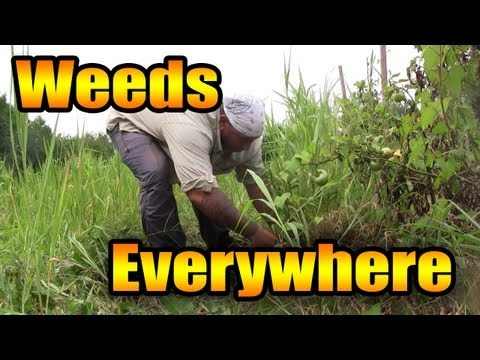 How to deal with overgrown weeds