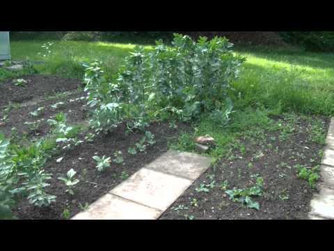 Gartenrundgang Juni 2014