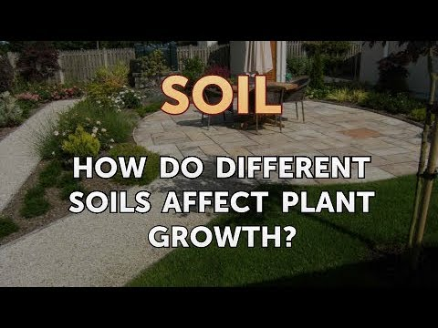 How Do Different Soils Affect Plant Growth?
