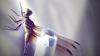 DIY Neuroscience   S1 • E5      How a dragonfly's brain is designed to kill | DIY Neuroscience, a TED series