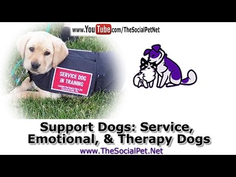 Support Dogs: Service, Emotional, and Therapy Dogs