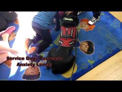On Command Canine Training Center / Social Skills Assessed Training