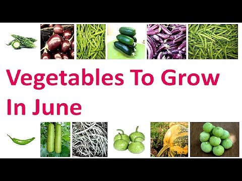 Vegetables To Grow In JUNE ! Vegetables to sow in June