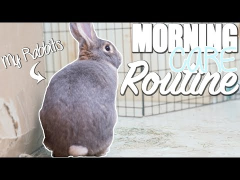 My Rabbit Morning Care Routine