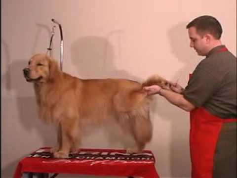 Grooming Golden Retriever - The Winning Way