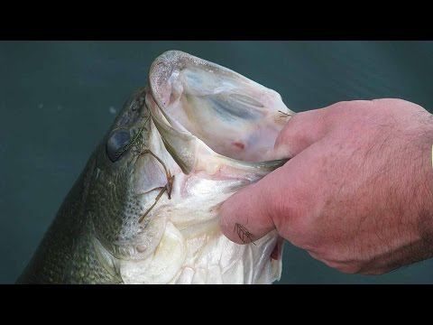 How To Hold A Bass The Right Way | Bass Fishing
