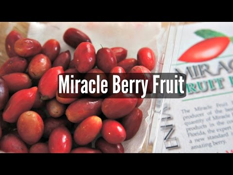 Tasting Miracle Berry Fruit – Fruity Fruits