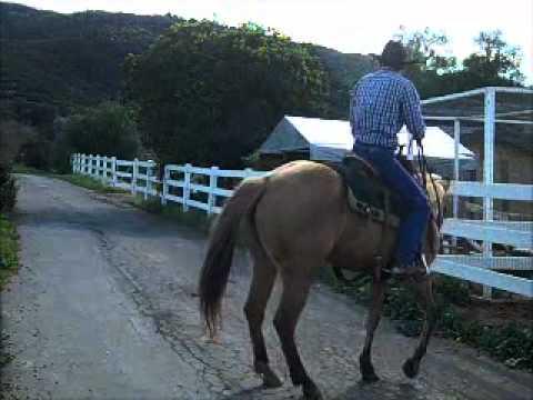Barn sour horse,David Lee Archer