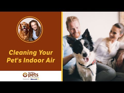 Cleaning Your Pet's Indoor Air