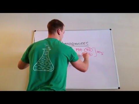 How Aminoglycosides Work
