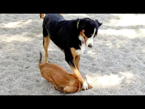 Just look at ALL THE WAYS how DOGS DIG HOLES - You have NO IDEA HOW FUNNY THIS IS!