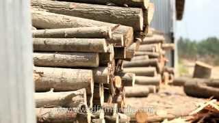 How Kashmir willow cricket bats are made