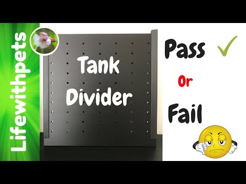 Did the Tank Divider, Pass or Fail?