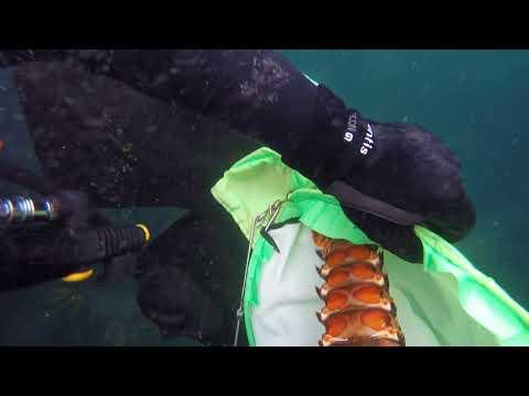 Nz coromandel cray diving