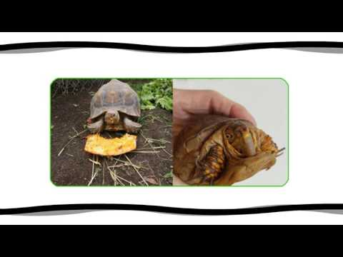 Tips on Taking Care of a Box Turtle