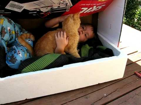 Baby Landon in the cat box bed