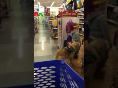 Birthday Shopping At Toys R Us With Autism Service Dog