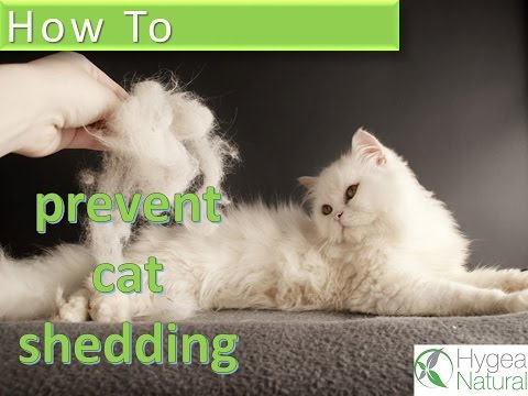 How to Prevent Cat Shedding