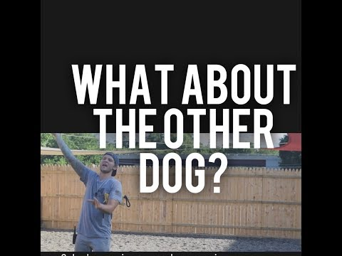 Dog Training in public places- What about the other dogs?  America's Canine Educator