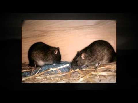Pest Control Service Pittsburgh PA Call (412) 532-1380