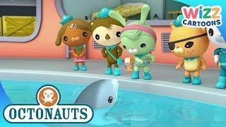 Octonauts | Dolphin Translator | Compilation | Wizz Cartoons